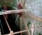 Restauration d'une grande roue à godets en chêne et en acier - Montage 8