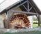 Installation d'une roue de type Sagebien - La roue tourne 9