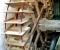 Restauration d'une roue à goitre rarissime - La roue terminée 1
