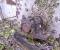 Restauration d'une grande roue de poitrine en Normandie - Avant travaux 5