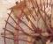 Restauration d'une roue Sagebien - Les aubes 5