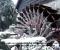 Restauration d'une très belle roue Zuppinger du XIXème - La roue est terminée 19