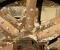 Restauration d'une très belle roue Zuppinger du XIXème - Montage des bras et cintres 10