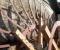 Restauration d'une très belle roue Zuppinger du XIXème - Montage des coyaux et des aubes 4